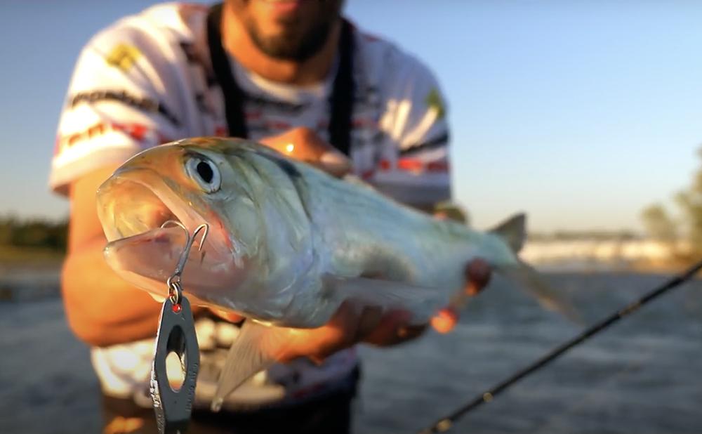 Pêche de l'alose